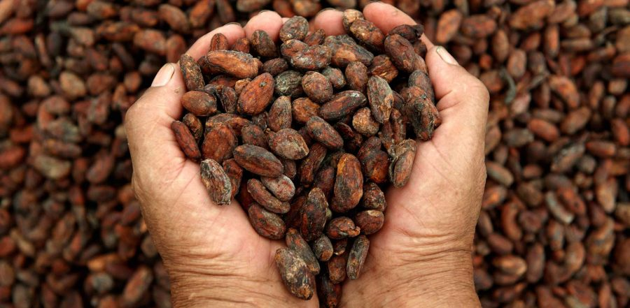Granos de Cacao que utilizamos en JOHFREJ C&V